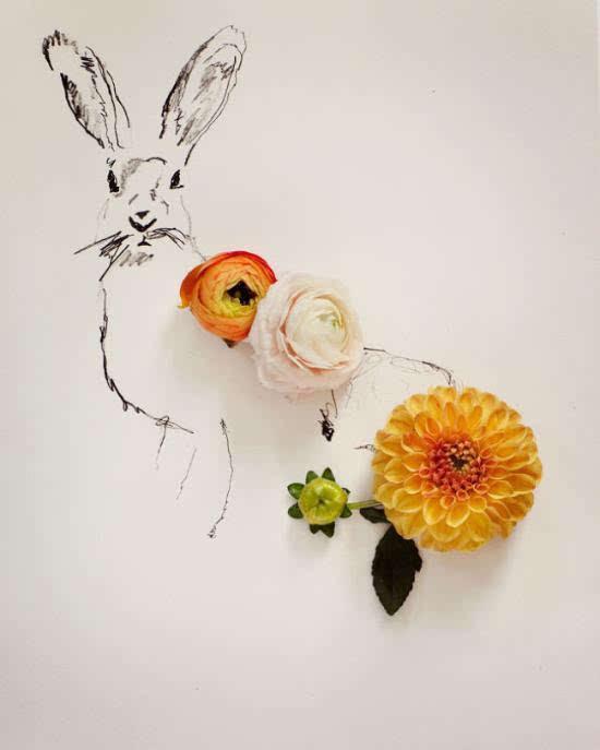 花朵铅笔画步骤图解-韩京宝 韩庆宝 梅花与小麻雀 朝鲜铅笔画图片