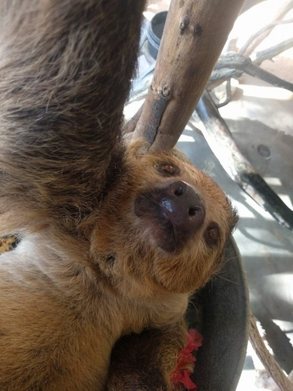 Google Photo借助动画片 动物乌托邦 进行动物自拍宣传活动
