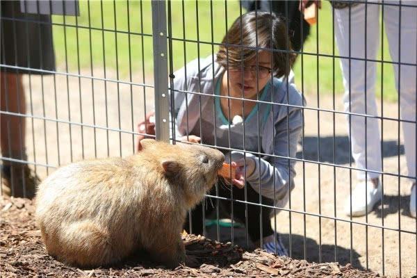 《爸妈2》澳洲动物园疯狂行 柳岩印小天闹乌龙
