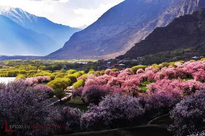风光旖旎在南京高淳 清明正是赏花时