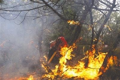 烧纸祭祀有隐患 上坟引发森林火灾