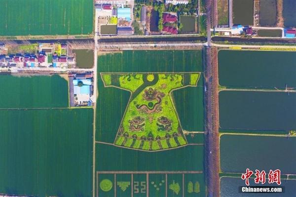 令人称奇!南京一农民油菜地种出龙袍