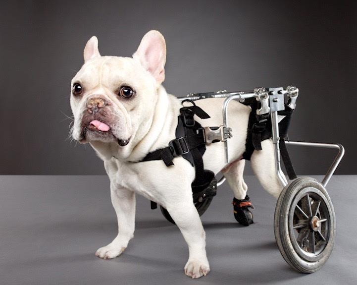 动物摄影:励志狗