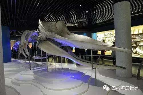 青岛海底世界海洋生物馆换新颜 向游客开放