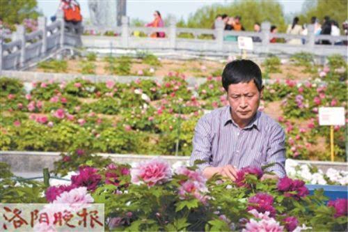 中国牡丹芍药协会副秘书长李清道