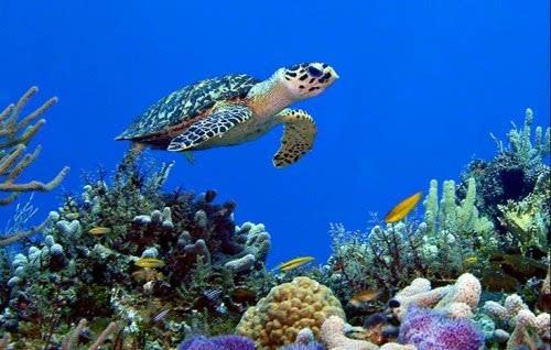 潜水爱好者的天堂 斯米兰群岛