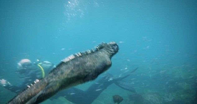 现实版哥斯拉怪兽现身太平洋 形象很丑但很温柔