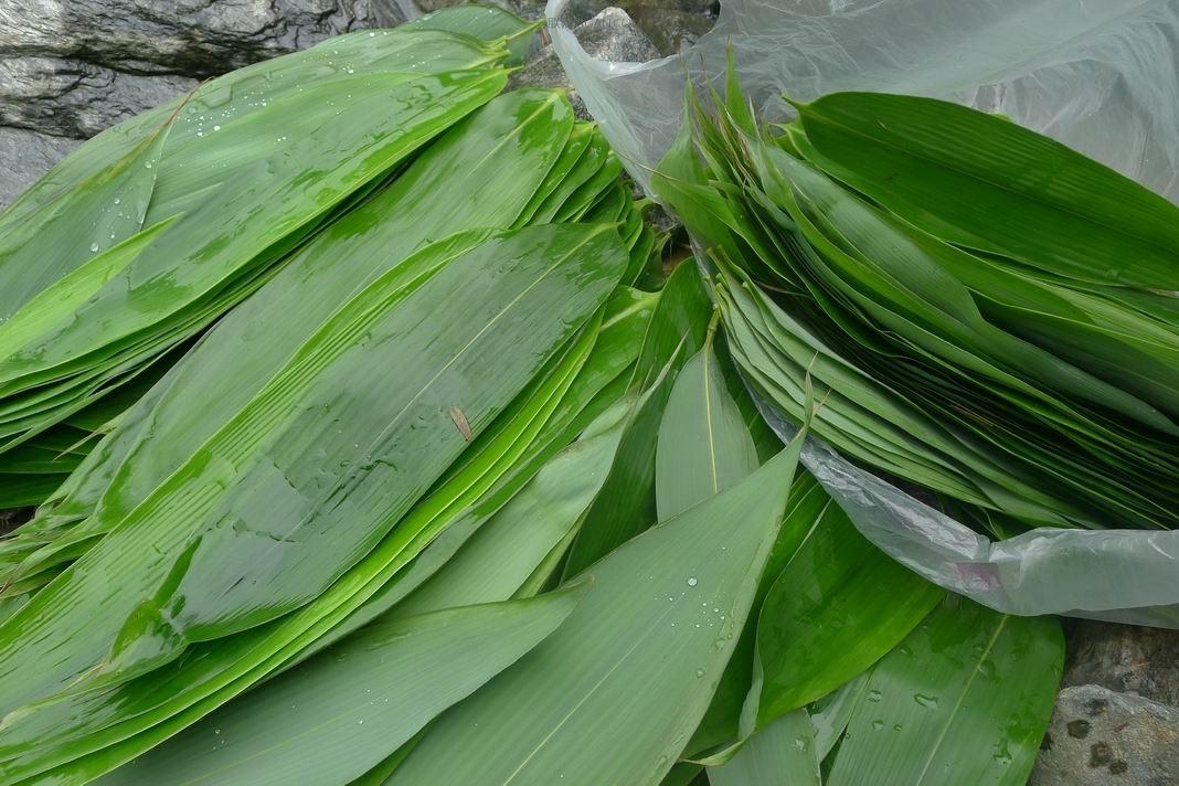 端午节包粽子用什么叶子