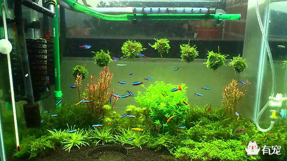 七彩神仙鱼缸水草造景