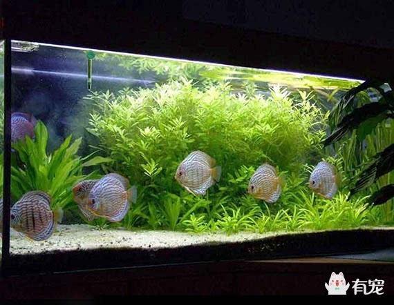 鱼缸造景知识:不同热带鱼的造景方法