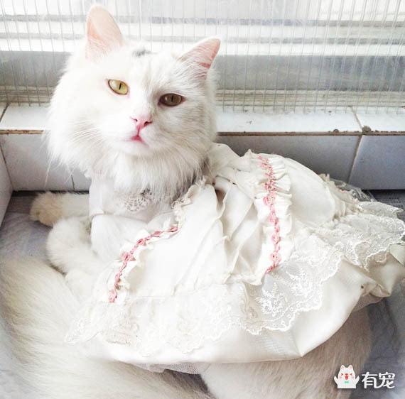 壁纸 动物 猫 猫咪 小猫 桌面 570_562
