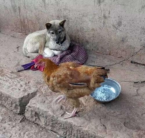 逗比动物图片,宠物猫咪和富贵狗狗