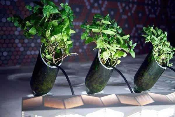 将酒瓶切割成好看的形状,垂直固定住,不漏水才可以开始种水培植物.