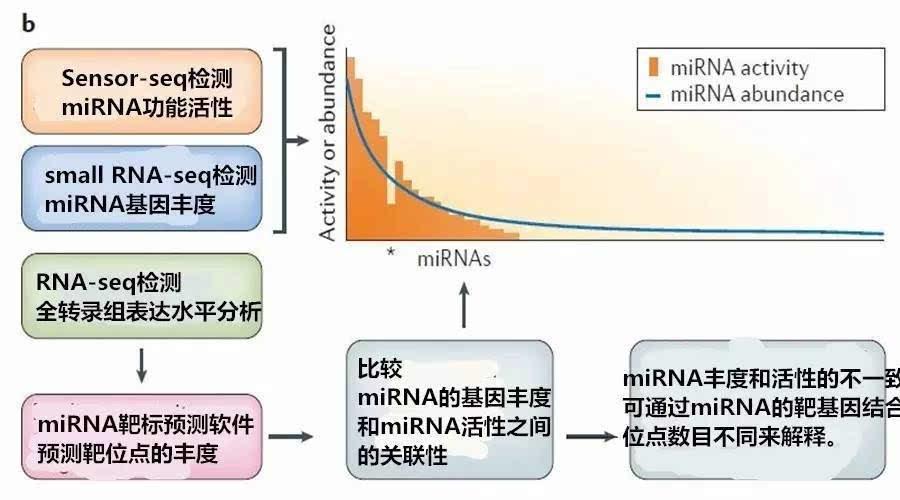 同时利用数学建模可发现cerna只有在细胞内的基因