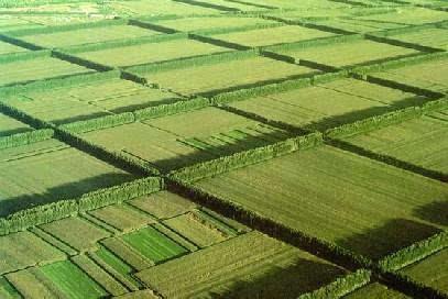 美国耕地面积_河北省人均耕地面积