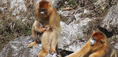 能够观察到猴子助产婆的动物行为可谓十分稀罕