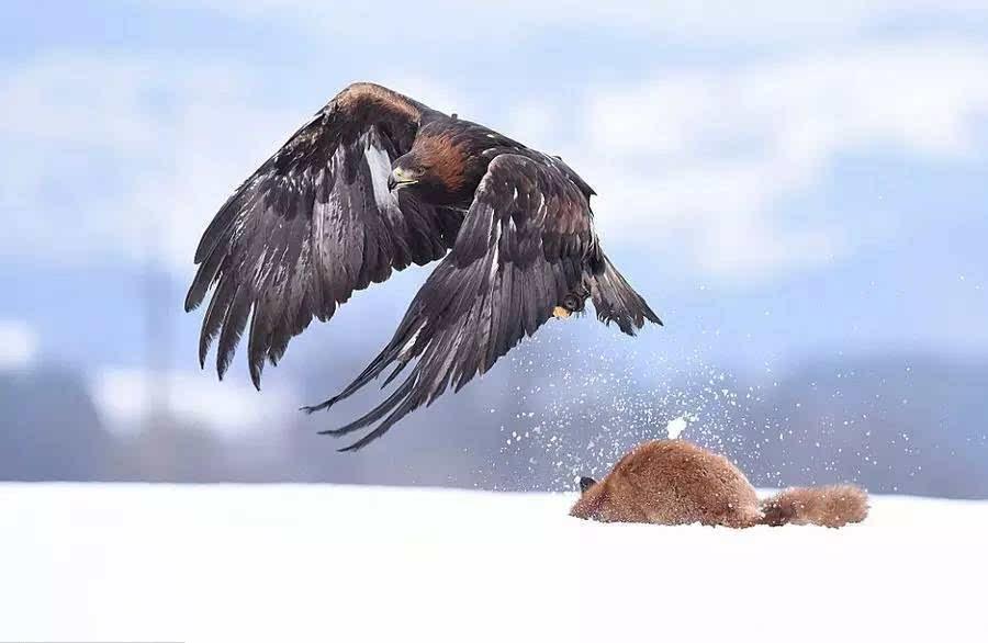 国际野生动物摄影大赛优秀作品