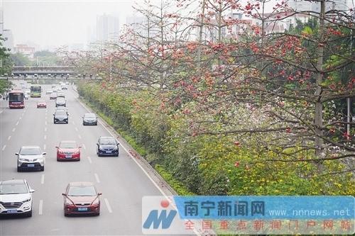 白沙大道上,红色木棉花和各色花相间形成一条