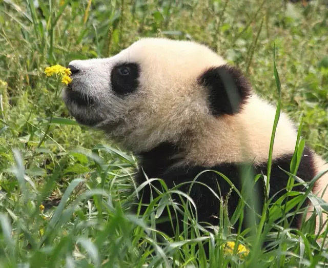 当动物亲吻花朵 整个世界都萌化了