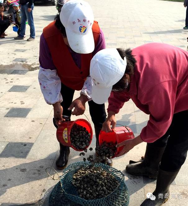 红岛蛤蜊节本周末开幕 历时16天让你挖个够