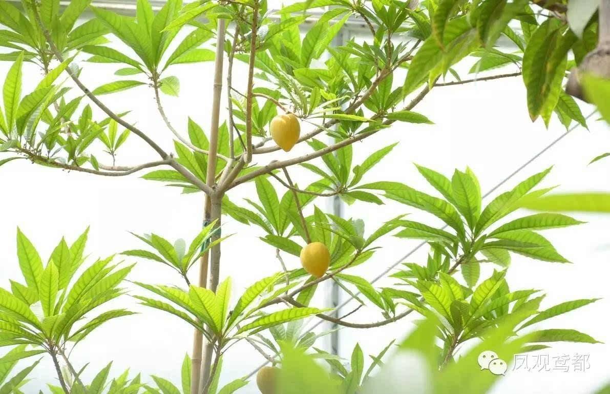 背景 壁纸 绿色 绿叶 树叶 植物 桌面 1191_769