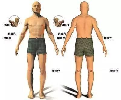 不同体表部位的皮肤结构有一定的差异