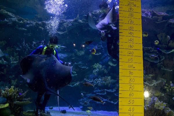 深圳海洋奇梦馆里的年度盛事 动物大体检