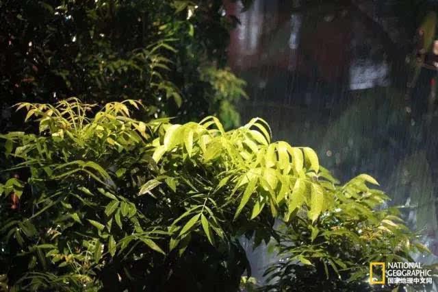 """乳玉皇妃丨雨说:""""我是天空洒下的拥抱.图片"""