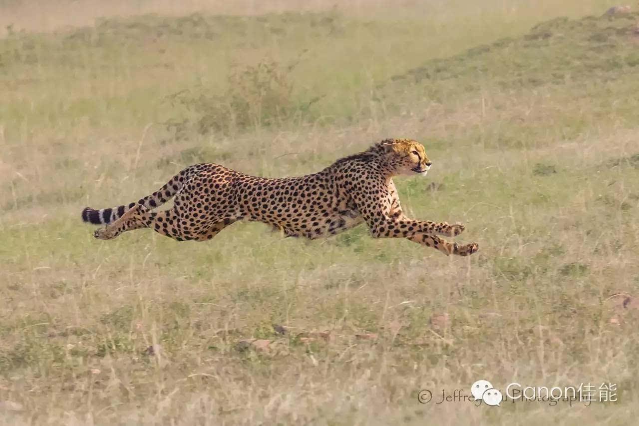 非洲野生动物摄影器材漫谈