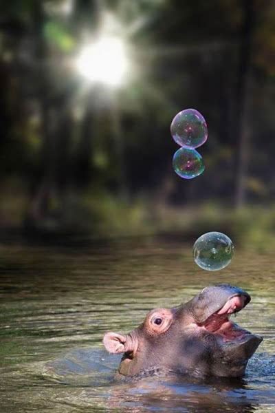 它们常常用吐泡泡的方式麻痹走到水边喝水的小动物