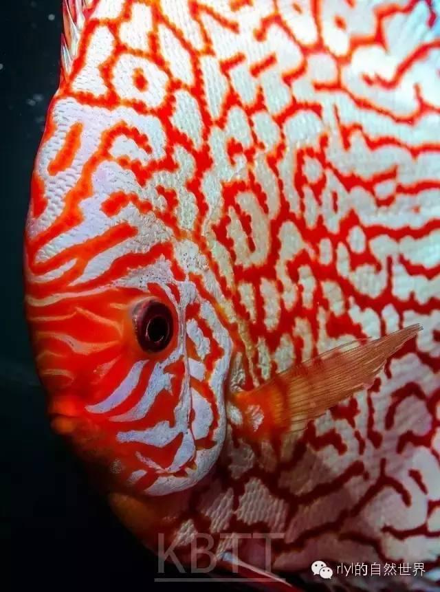 壁纸 动物 剪纸 鱼 鱼类 640_861 竖版 竖屏 手机