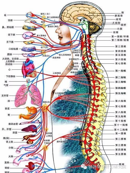 耳解剖结构图