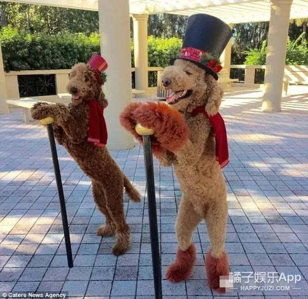 看看这两只狗把恩爱秀的 说好的建国后动物不能成精呢!
