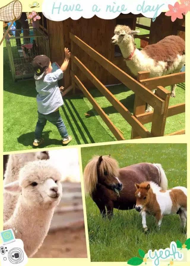 神兽羊驼,迷你袋鼠,呆萌长毛兔,漂亮的孔雀和小香猪等可爱小动物亲临