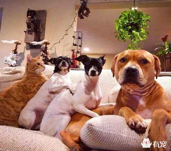真正的大家族:养七只动物是什么体验?