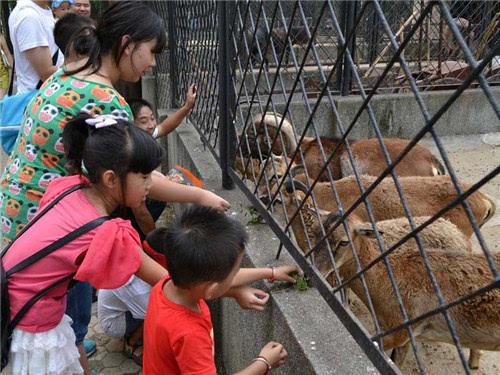 武汉动物园资料图