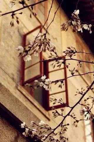 别开错了窗户(非常经典) - 清 雅 - 清     雅博客