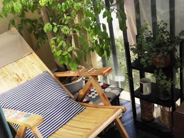 家里的两小只时常霸占阳台晒太阳图片