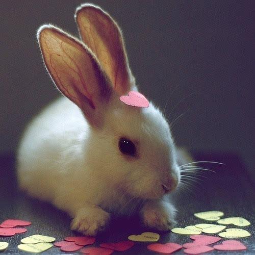 竖着一对大耳朵的小白兔