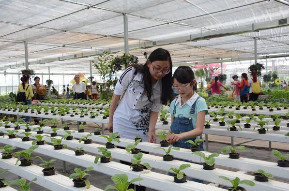 园内主要设置了荷花观赏,儿童游乐,农事体验,蔬菜,水果采摘以及蔬菜