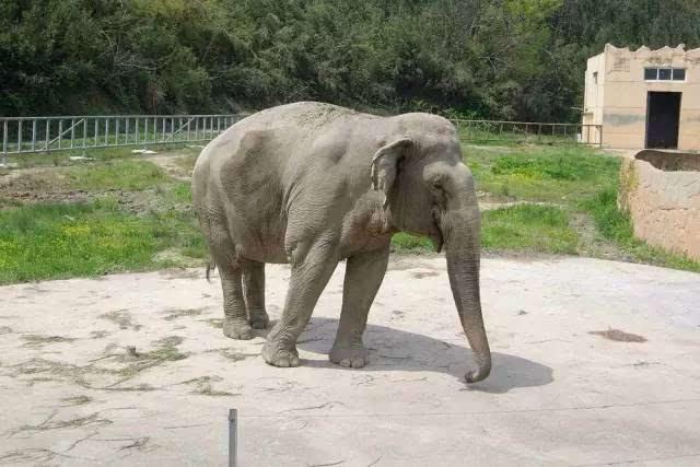 5月7号或8号宁波雅戈尔野生动物园亲子1日游