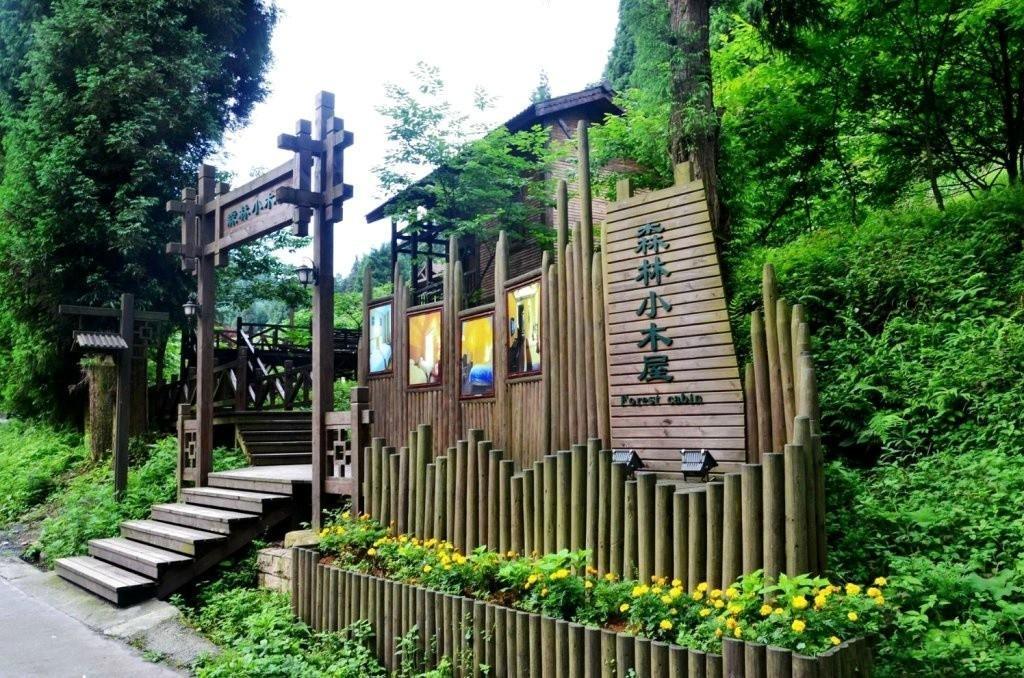 奇幻森林里的小木屋丨湖北这片未开发的原始森林居然美得像童话一般