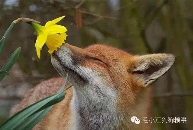 你见过动物界的花仙子吗?