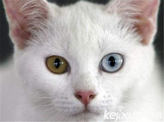 世界十大最萌猫狗盘点 萌宠哈士奇智商太高