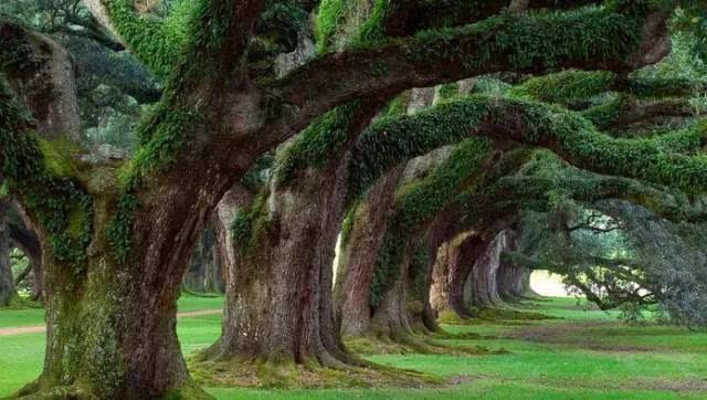 """最近疯传的""""大树理论"""" 绝对经典!"""