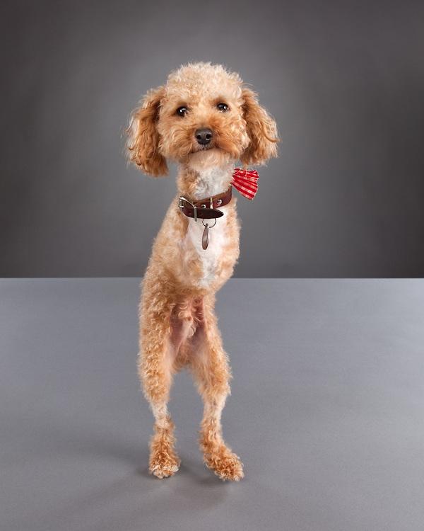 【环球网报道】虽然面临着身体上的缺陷,这些可爱的小狗依然能笑对生活。它们通过特制的轮椅坚强地行走,并在摄影师的相机前展现自己最阳光励志的一面。 常年与动物接触和沟通,专业摄影师戴维森(Davidson)已经成为一位动物专家。她通过抚摸,与残疾小狗建立感情与信任。正是基于对残疾动物的关爱,她捕捉到了最令人感动的一组狗狗照片。残疾小狗们憨态可掬的神态与善良清澈的眼神展现了它们对生活的热爱与信心。 (实习编译户呈曦)