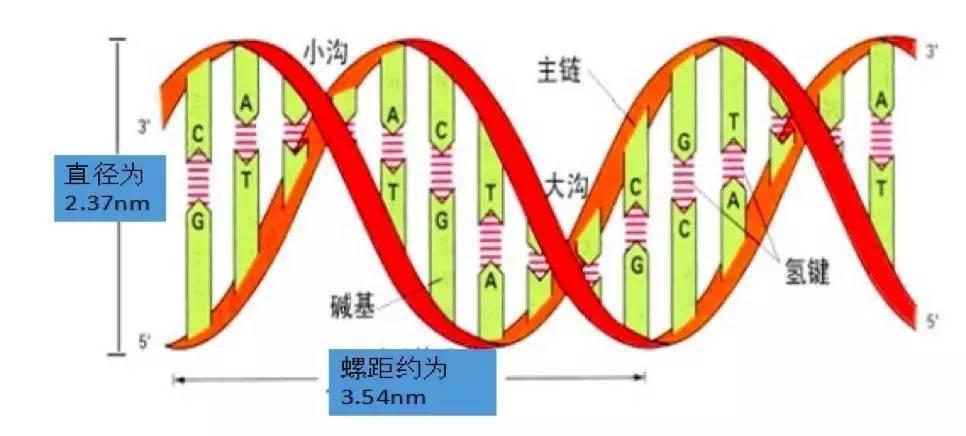 生物化学:核酸的结构和功能