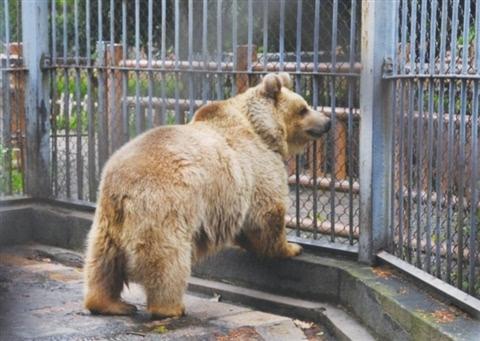 上方山森林动物世界初步预计本月底开园,门口设有动物园站,公交车415
