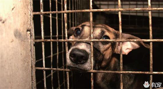 """""""这样一个关爱动物的温暖理念,让免费领养宠物瞬间兴起."""