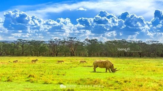 肯尼亚 圆一个动物世界的梦
